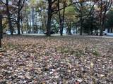10598 Lake Drive - Photo 4