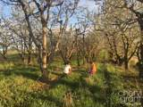 3840 Cherry Blossom Drive - Photo 6