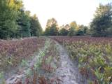 80  Acres Healy Lake Road - Photo 15