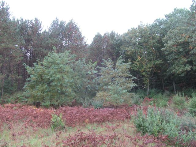 0 Skookum Road F & G, Luther, MI 49656 (MLS #18045020) :: Deb Stevenson Group - Greenridge Realty