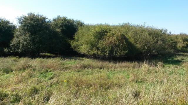 Switalski Road, Manistee, MI 49660 (MLS #18046100) :: Deb Stevenson Group - Greenridge Realty