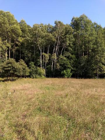 120 Acres North Star Trail, Kaleva, MI 49645 (MLS #18046411) :: JH Realty Partners