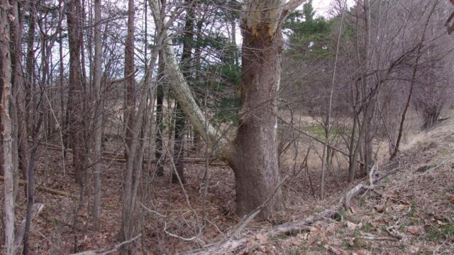 Woodland & Bayne Road, Woodland, MI 48897 (MLS #19014842) :: Deb Stevenson Group - Greenridge Realty