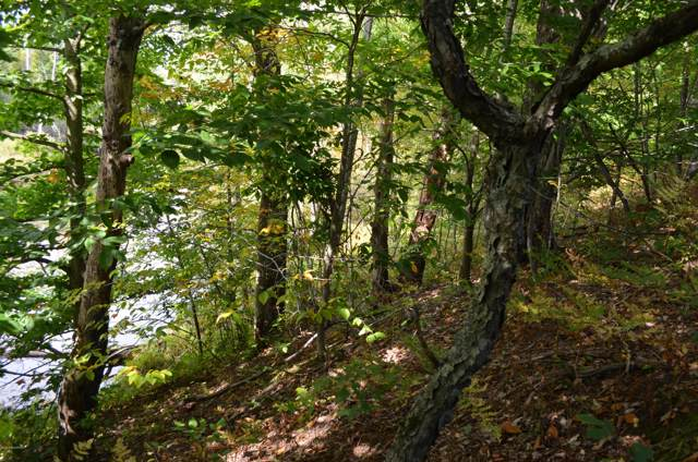 13 Mile Road, Bear Lake, MI 49614 (MLS #19049322) :: CENTURY 21 C. Howard