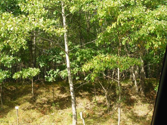 8454 Small Avenue, Canadian Lakes, MI 49346 (MLS #19051791) :: Deb Stevenson Group - Greenridge Realty
