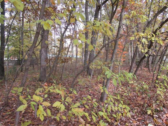 Lot 6 Kiella Drive, Allegan, MI 49010 (MLS #21012420) :: CENTURY 21 C. Howard