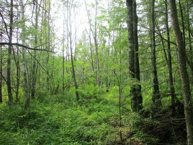 0000 Norconk Road, Bear Lake, MI 49614 (MLS #21064966) :: Ron Ekema Team