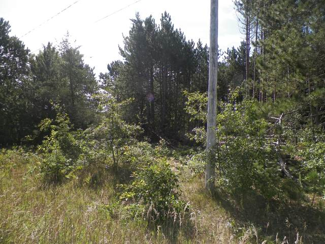 Lot F Majerle St., Cadillac, MI 49601 (MLS #21100683) :: Sold by Stevo Team | @Home Realty