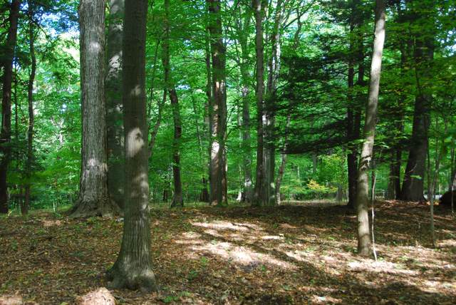 Lot 39 Beech Drive, South Haven, MI 49090 (MLS #21108689) :: Sold by Stevo Team   @Home Realty