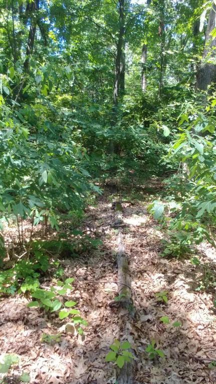 Lots 18&19 Comanche Trail, New Buffalo, MI 49117 (MLS #18032002) :: Carlson Realtors & Development