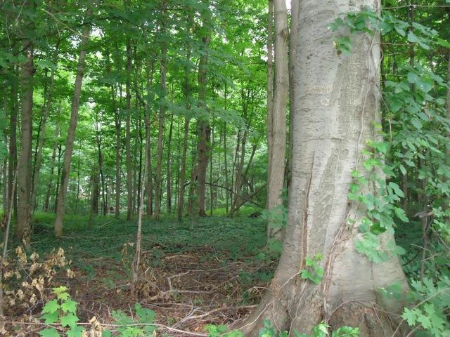 Forest Hall Avenue, Cassopolis, MI 49031 (MLS #19008627) :: Deb Stevenson Group - Greenridge Realty