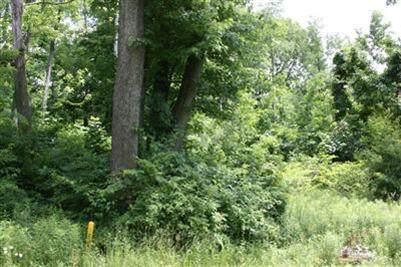 1 Anita Lane, Lakeside, MI 49116 (MLS #20043923) :: CENTURY 21 C. Howard