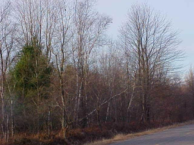 V/L Lorenson Road, Muskegon, MI 49445 (MLS #21107173) :: Sold by Stevo Team | @Home Realty