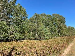 00 S Frank Smith Rd, Chase, MI 49623 (MLS #21107732) :: JH Realty Partners