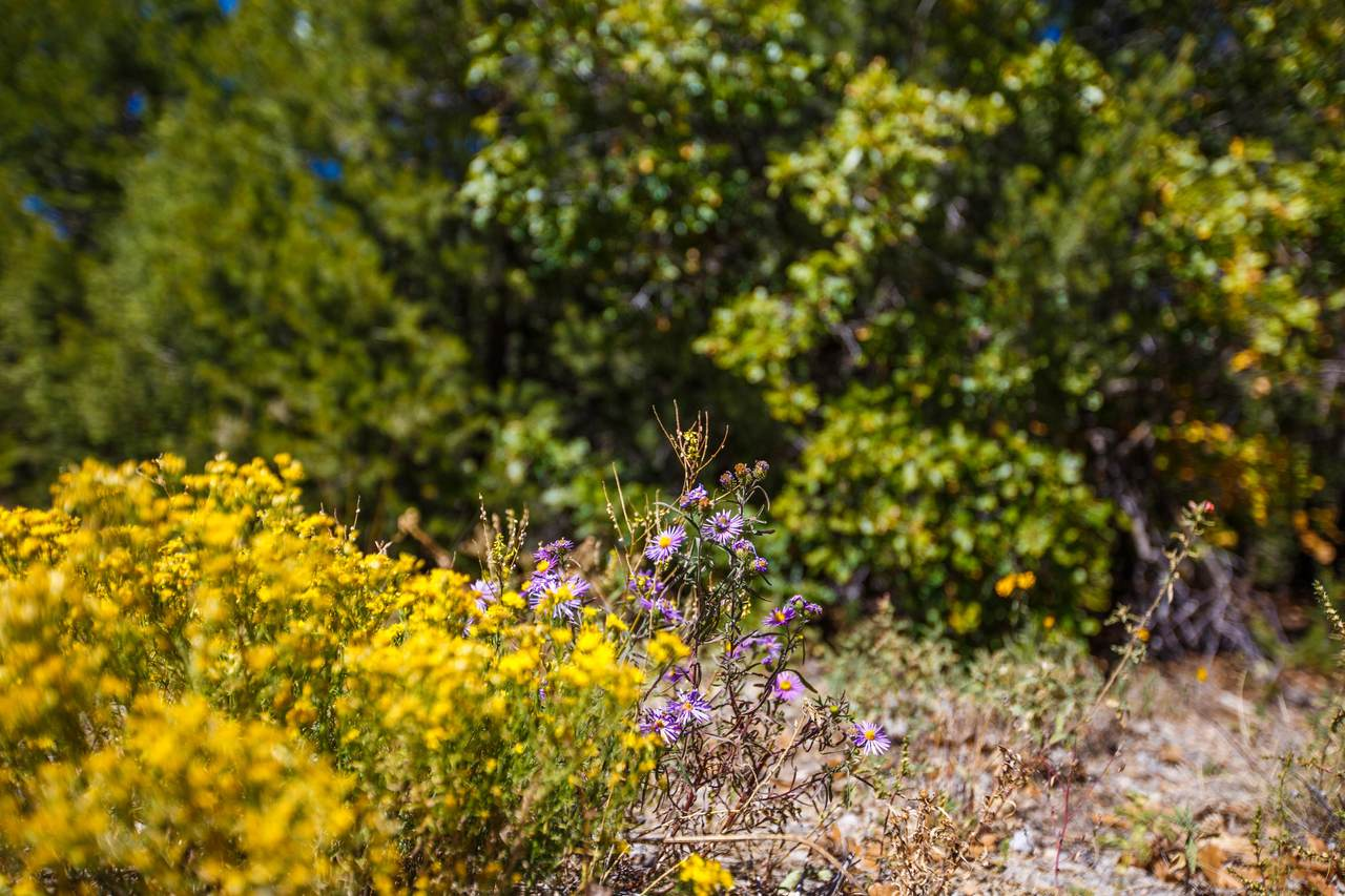 32 Granny Canyon Trail - Photo 1