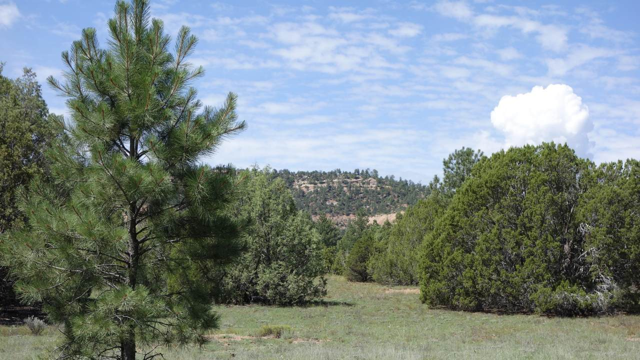 Lot 10 Timber Lake Road - Photo 1