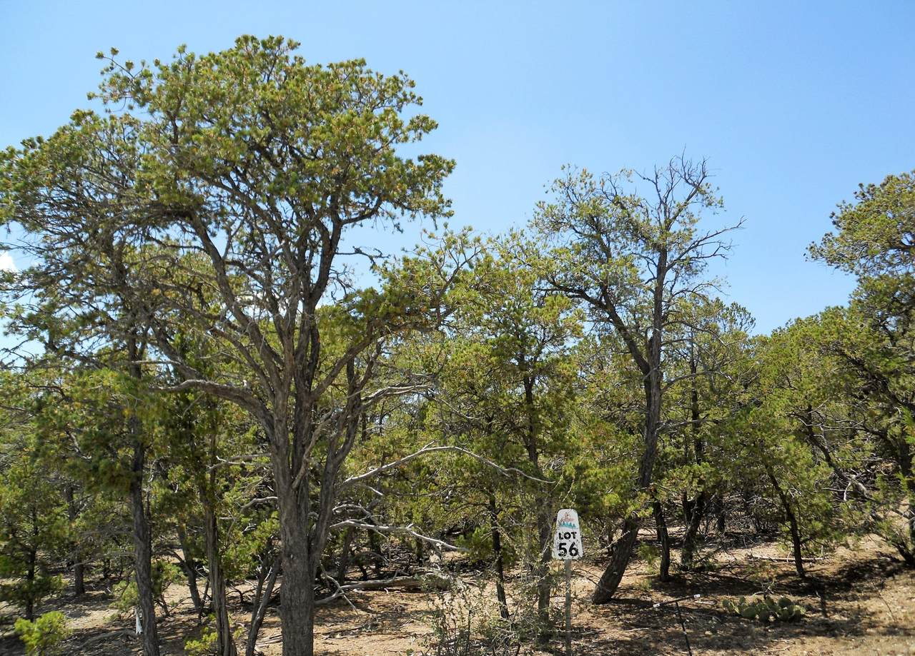 34 Rancho Verde Road - Photo 1