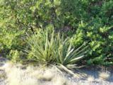 11 Rancho Verde Road - Photo 14