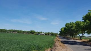 172 Edeal Road, Los Lunas, NM 87031 (MLS #892907) :: Campbell & Campbell Real Estate Services