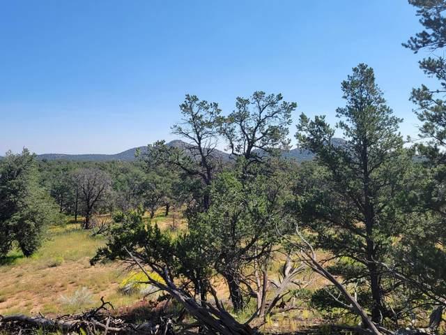 39 Elk Trail, Pie Town, NM 87827 (MLS #1001179) :: Sandi Pressley Team