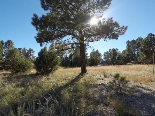 Forest Service Road 253, Manzano, NM 87016 (MLS #1003094) :: Sandi Pressley Team