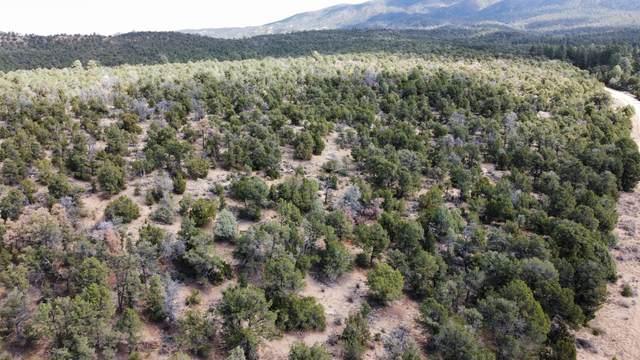 Tbd Naranjo Creek Road, La Jara, NM 87027 (MLS #1003445) :: Sandi Pressley Team