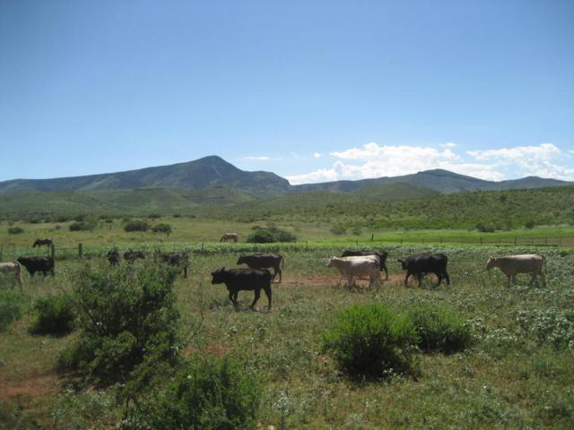 Apache Gap Ranch, Truth or Consequences, NM 87901 (MLS #881620) :: Campbell & Campbell Real Estate Services