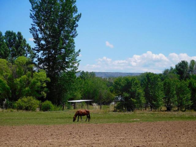 Lewis Lane, Pena Blanca, NM 87041 (MLS #892863) :: Campbell & Campbell Real Estate Services