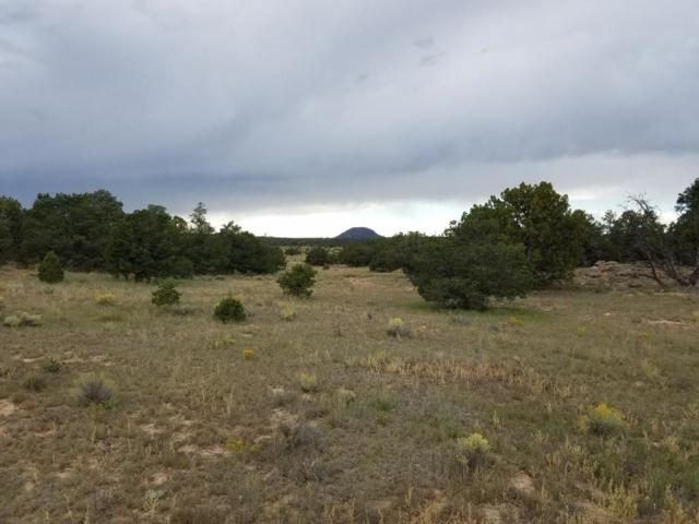 Lot 106 Blue Hills Ranch, Quemado, NM 87829 (MLS #903302) :: The Bigelow Team / Realty One of New Mexico