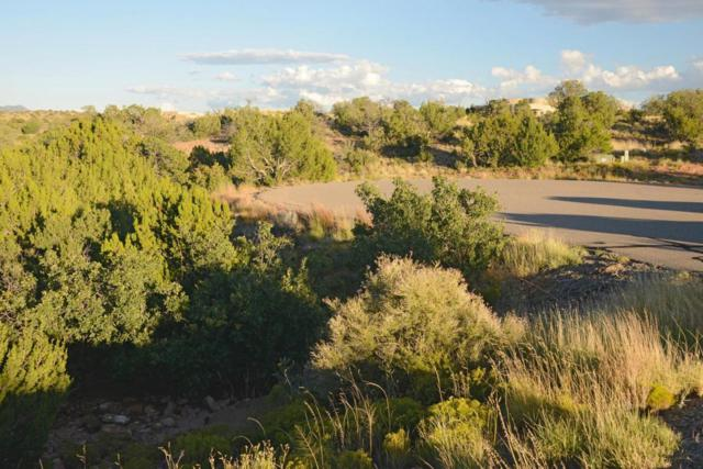 105 Wild Primrose, Placitas, NM 87043 (MLS #903478) :: Rickert Property Group