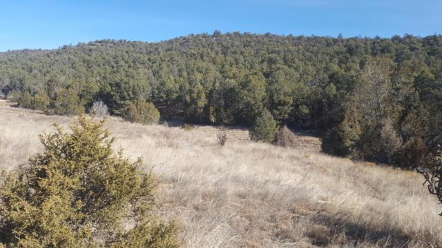 100 Mountain Valley Drive, Edgewood, NM 87015 (MLS #909228) :: Campbell & Campbell Real Estate Services