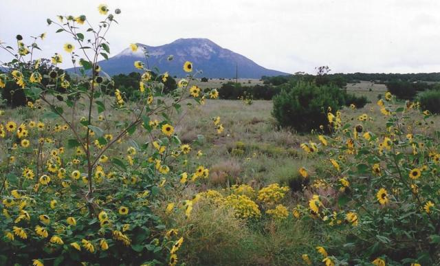 137 Entranosa Road, Sandia Park, NM 87047 (MLS #910351) :: Will Beecher at Keller Williams Realty