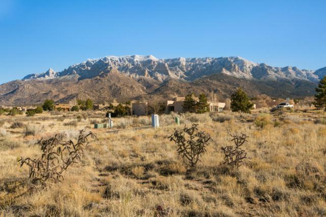 13534 Elena Gallegos Place NE, Albuquerque, NM 87111 (MLS #911680) :: Your Casa Team