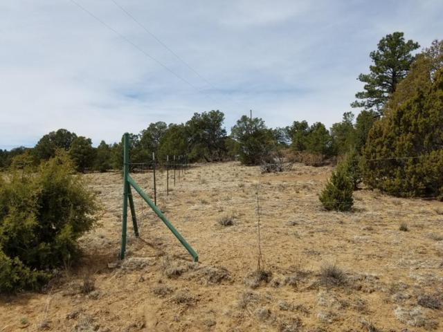 Lot 12 Wild Horse Ranch, Pie Town, NM 87827 (MLS #917520) :: Campbell & Campbell Real Estate Services