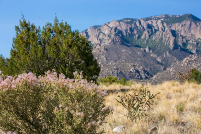 6400 Gambel Oak Court NE, Albuquerque, NM 87111 (MLS #920528) :: Your Casa Team