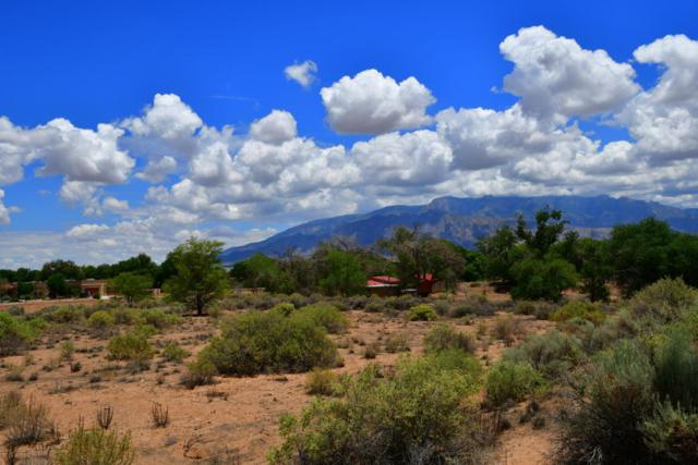 118 Stella Lane, Corrales, NM 87048 (MLS #921455) :: Campbell & Campbell Real Estate Services