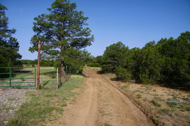 110 Salazar Road, Tijeras, NM 87059 (MLS #926112) :: Campbell & Campbell Real Estate Services