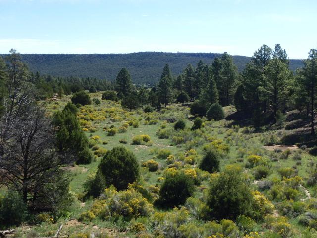El Ocio Ranch, Grants, NM 87020 (MLS #927830) :: Campbell & Campbell Real Estate Services