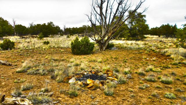 Lot 64 Golden Horseshoe Trail, Quemado, NM 87829 (MLS #928778) :: The Bigelow Team / Realty One of New Mexico