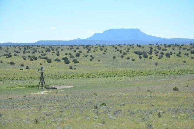 32 Scruffy Trail E-W Ranch 800 Ac, Quemado, NM 87829 (MLS #929297) :: Silesha & Company