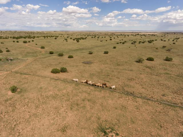 614 State Road 344, Edgewood, NM 87015 (MLS #929690) :: Silesha & Company