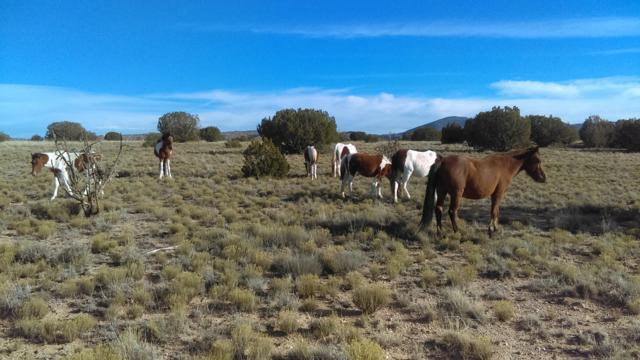 Tract 2-4 Lands Of J Victor Pongetti, Placitas, NM 87043 (MLS #930585) :: Campbell & Campbell Real Estate Services