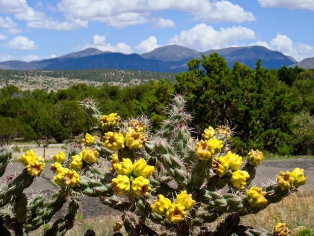 16 Osito Road, Sandia Park, NM 87047 (MLS #934666) :: The Buchman Group