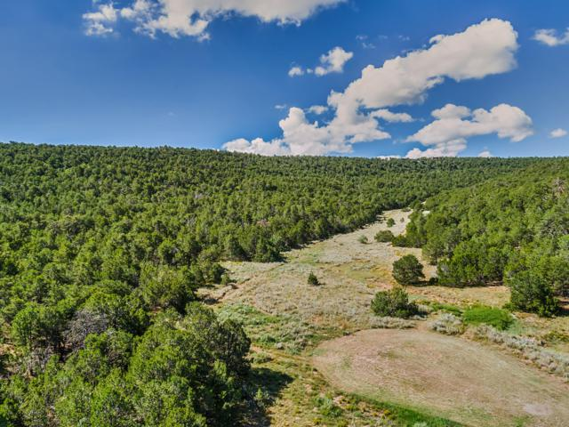 24 Anne Pickard Loop, Tijeras, NM 87059 (MLS #936868) :: Campbell & Campbell Real Estate Services