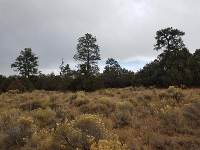 Tr 10 James Valley, Grants, NM 87020 (MLS #937944) :: Silesha & Company