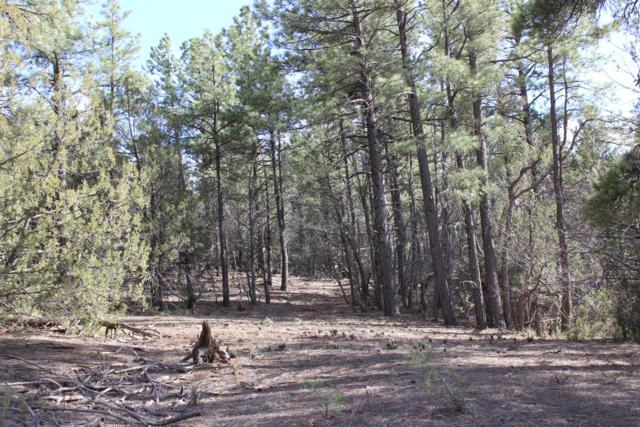 85 Carolino Canyon Road, Tijeras, NM 87059 (MLS #941511) :: Berkshire Hathaway HomeServices Santa Fe Real Estate