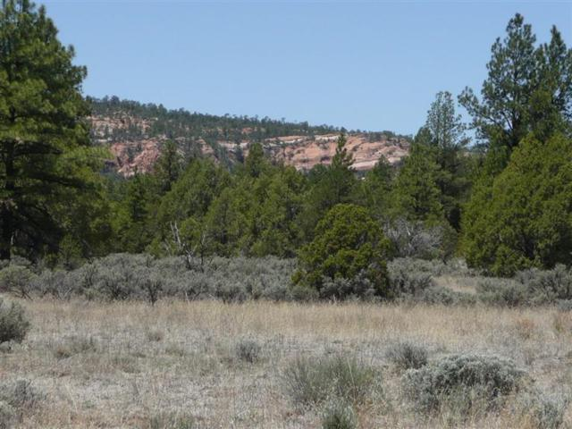 Lot 26 Pinetree Road, Ramah, NM 87321 (MLS #943938) :: Campbell & Campbell Real Estate Services