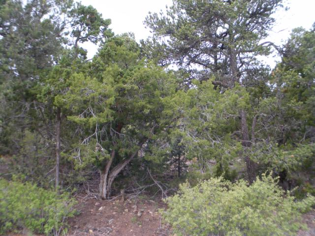 8 Fir Loop, Cedar Crest, NM 87008 (MLS #944349) :: Campbell & Campbell Real Estate Services