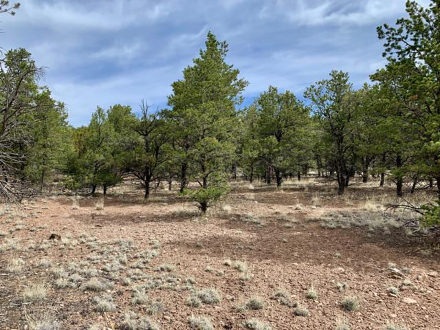 162 Homestead Subdivision Trail, Datil, NM 87821 (MLS #944580) :: Silesha & Company
