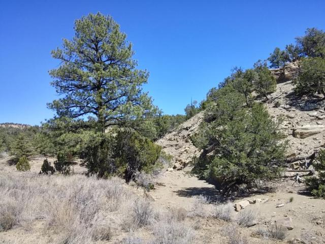 Ph1 Lot 50 Wild Horse Ranch, Pie Town, NM 87827 (MLS #949157) :: The Bigelow Team / Red Fox Realty